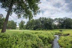 Curvatura do rio em torno do verde do golfe imagens de stock