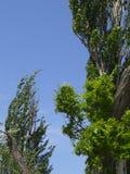 Curvaturas dos ramos Fotografia de Stock