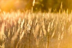 curvaturas no por do sol pelo lago imagem de stock royalty free