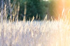 curvaturas no por do sol pelo lago imagem de stock