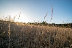 curvaturas no por do sol pelo lago fotografia de stock royalty free