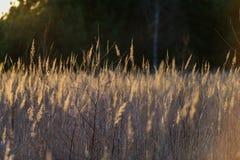 curvaturas no por do sol pelo lago imagens de stock
