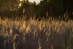 curvaturas no por do sol pelo lago fotos de stock royalty free