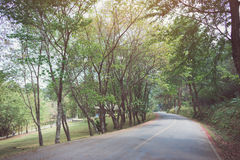 Curve asphalt road with tree sideway in forest. Stock Image