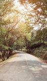 Curve asphalt road with tree sideway in forest. Royalty Free Stock Photo