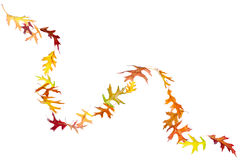 Curve of Autumn Leaves Royalty Free Stock Photos