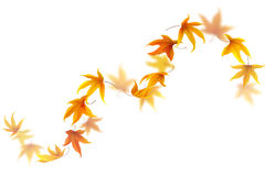 Curve of Autumn Leaves Stock Photo