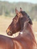 Curve dal cavallo Fotografie Stock