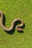 Curve del serpente Fotografia Stock