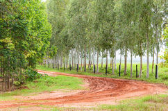 Curve on dirt road of a farm with tire tracks on ground Stock Photos
