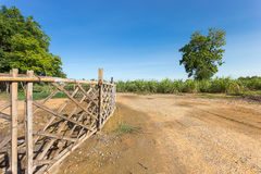 Curve dirt road leading to the sugarcane farm Royalty Free Stock Images