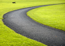 Curve and dog Royalty Free Stock Images