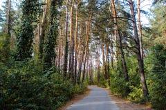Curve el camino en bosque profundo del pino del otoño del bosque Fotos de archivo libres de regalías