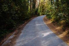 Curve el camino en bosque profundo del pino del otoño del bosque Fotografía de archivo libre de regalías