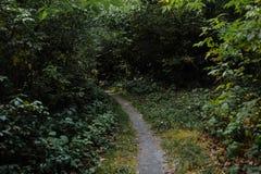 Curve el camino en bosque profundo del pino del otoño del bosque Fotos de archivo