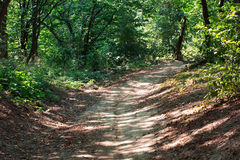 Curve footpath in the spring green forest Royalty Free Stock Images