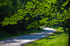 Curve of a forest road at summer in Kosutnjak, Belgrade Royalty Free Stock Image