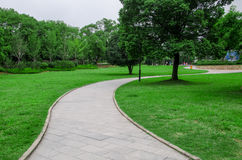 Curve path. On grass ,with trees ,in summer Royalty Free Stock Photo
