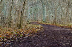 Curve pathway going through late autumn park Stock Images