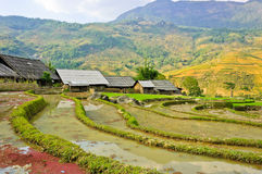 Curve of rice terraced field Royalty Free Stock Photography