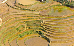 Curve of rice terraced fields Stock Image