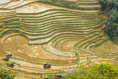 Curve at rice terraces at the mountains in Tavan Village Sapa. Royalty Free Stock Photos