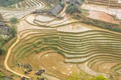 Curve of rice terraces in Tavan Village Sapa. Stock Images