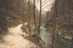 Curve right pathway and clear stream in forest. Soil ground sidewalk to turning right beside clear water stream flow in deep forest of winter, Small brook royalty free stock image