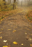 Curve road. To autumn park Stock Image