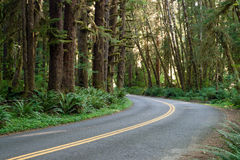 Curve In The Road Hoh Rain Forest Washington State Stock Photos