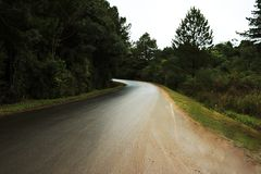 Curve of a road in the middle of a forest stock photography