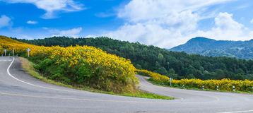 Curve road on a mountain. Curve road on the hill with flowers by the roadside. Front of the mountains and forests Stock Image