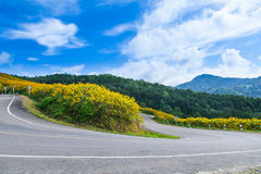 Curve road on a mountain Stock Photography
