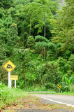 Curve road and rainforest in Thailand mountain Stock Photos