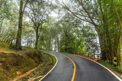 Curve road up hill in misty forest Stock Photos