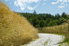 Curve in a Rural Road Stock Photography