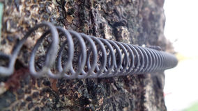 Curve of sling on tree bark Royalty Free Stock Photo