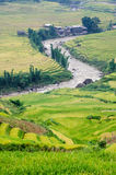 Curve of stream, Muong Hoa valley terraced fields, Sa Pa town Stock Photos
