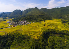 The curve of terraced rice fields Royalty Free Stock Photos