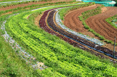 Curve vegetable fields. In Chiangmai, Thailand Stock Image