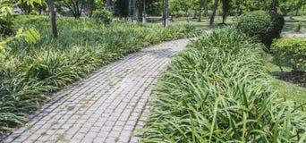 Curve walk way on greensward in garden, bangkok, thaialnd Stock Photos