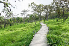 Curve walkway. In the national park in daylight Stock Photography