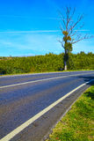 Curve way of asphalt road Royalty Free Stock Photo