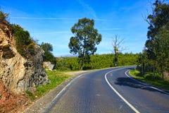 Curve way of asphalt road Stock Photography