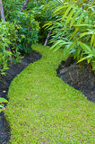 Curve way of fresh green grass Royalty Free Stock Images