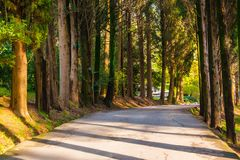 Alley in Sochi Arboretum, Russia. Curved alley with long shadows in Sochi Arboretum in sunny day, Russia Stock Images