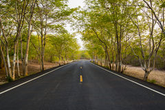 Curved  asphalt country road in green forest Royalty Free Stock Photography