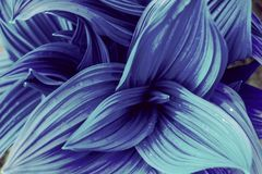 Curved blue leaves abstract texture. Nature fantasy background stock image