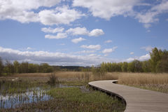 Curved boardwalk through bog Stock Image