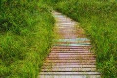 A Curved Boardwalk in a Bog Stock Photo